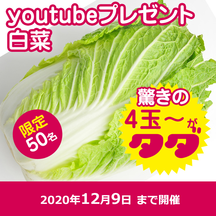 【youtube】白菜4個以上(箱に入るだけ)プレゼント